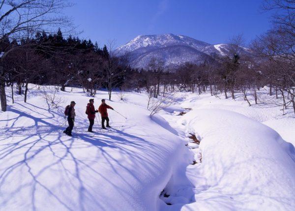 【信州・信濃町癒しの森】風景_冬_冬の森体験1